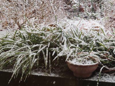 001雪しんしん