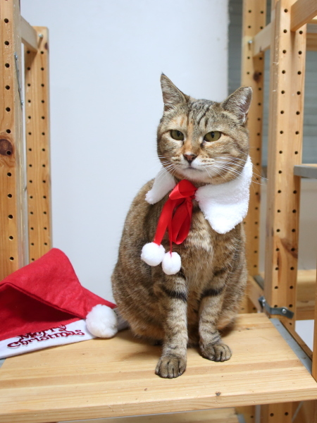 とと の回復とメリークリスマス3