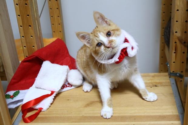 とと の回復とメリークリスマス2