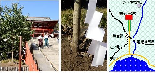 鎌倉イチョウのマップ