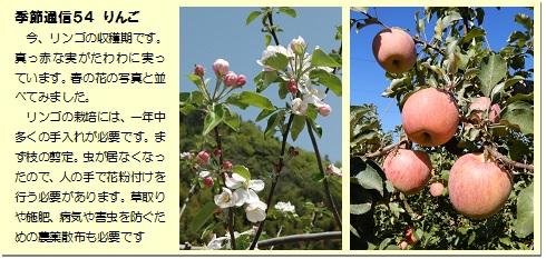 季節通信54りんご
