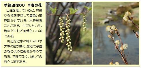 季節通信60早春の花