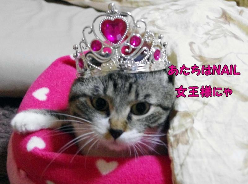 NAIL女王様