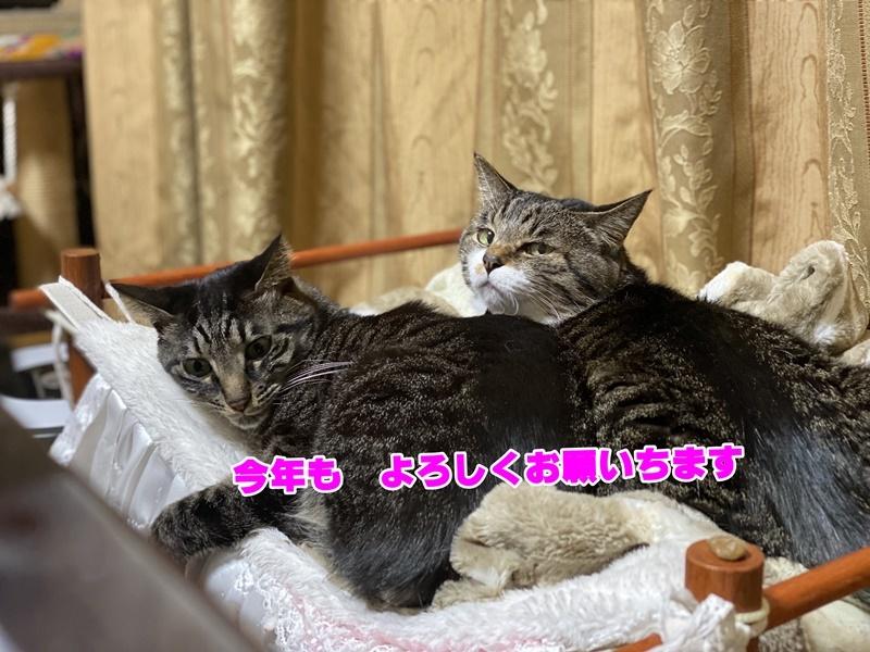 IMG_E0472-1.jpg