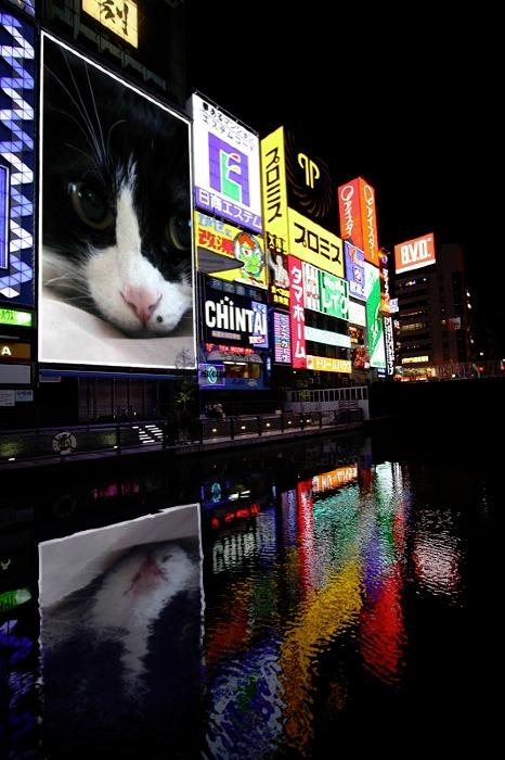 PhotoFunia-2cd9dd0.jpg