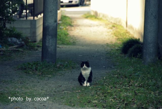 DSC_0005 2011-12-04 10-19-32