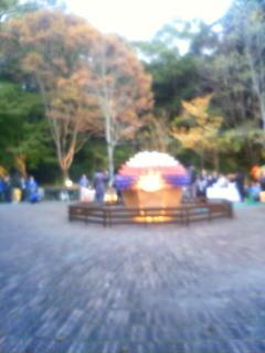 二日東山植物園ライトアップ