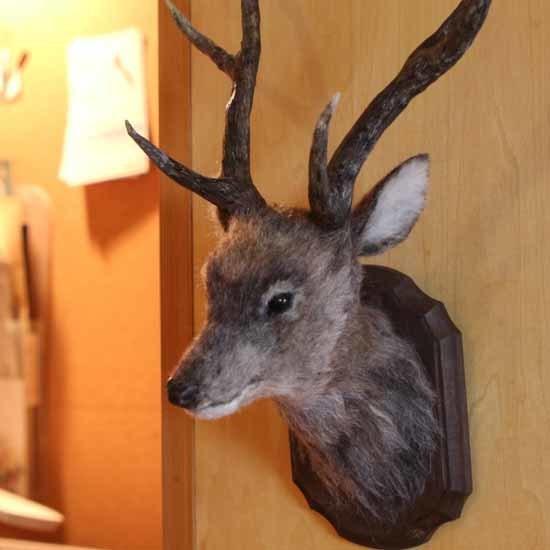 鹿のトロフィー-1