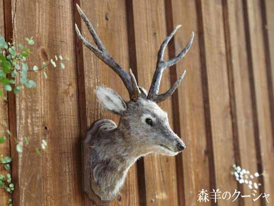 鹿のトロフィー-3