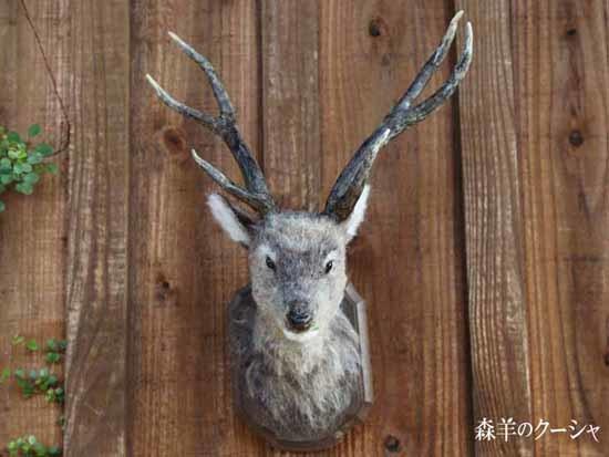 鹿のトロフィー-5