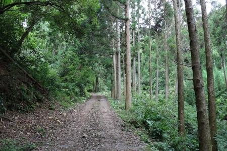 登山道(4)