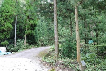 登山道(5)