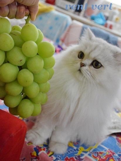 大きな葡萄1