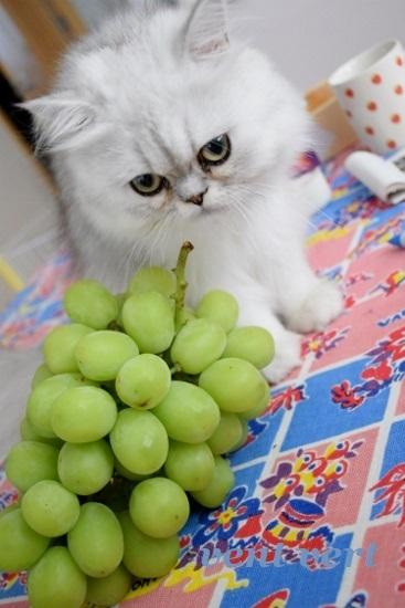 大きな葡萄3
