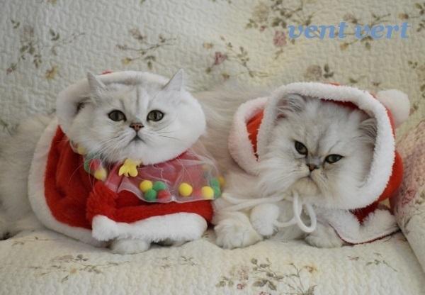 メリークリスマス9