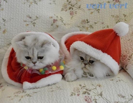 メリークリスマス8