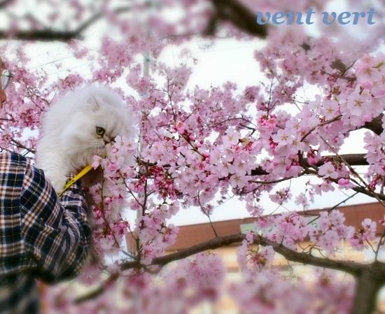 2020桜5