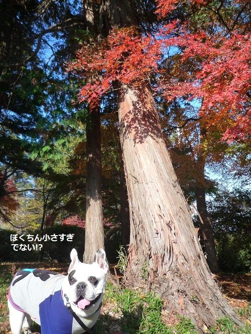 にこら201011to201108 468 - コピー
