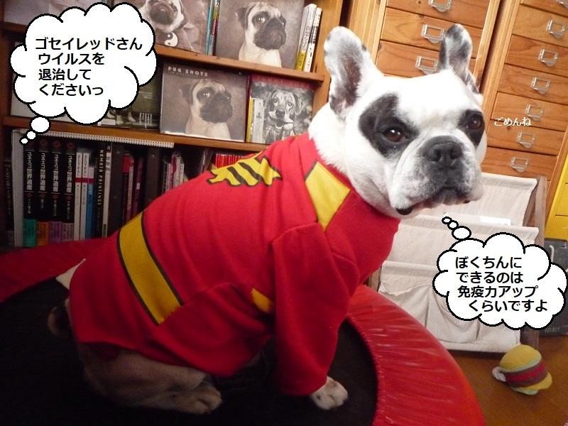 にこら201011to201108 2721
