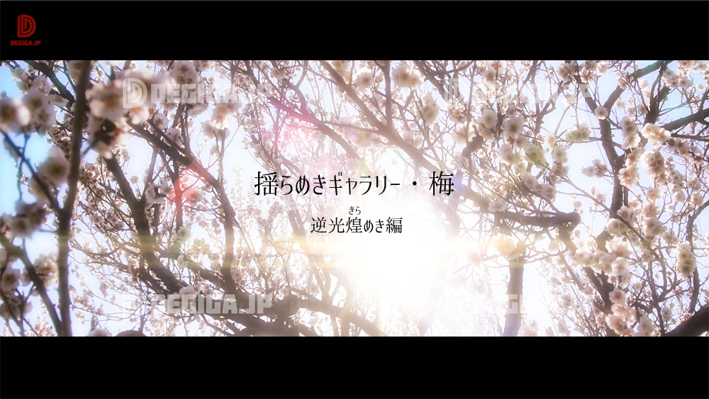 新作動画素材『揺らめきギャラリー・梅』デモリール紹介(逆光煌めき編)