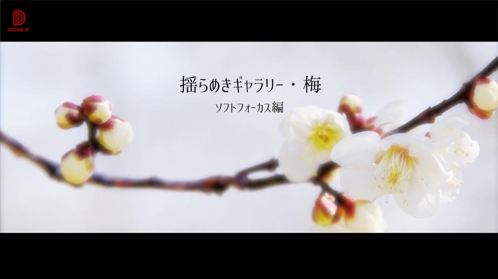 動画タイトル『揺らめきギャラリー・梅』紹介デモ2