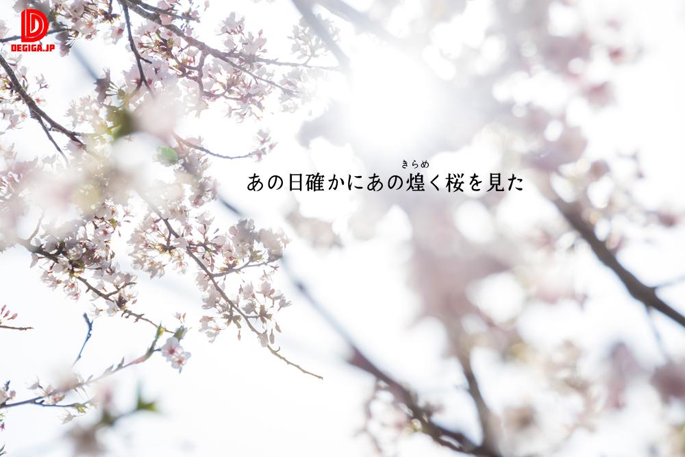 桜素材新作『あの日確かにあの煌めく桜を見た』より