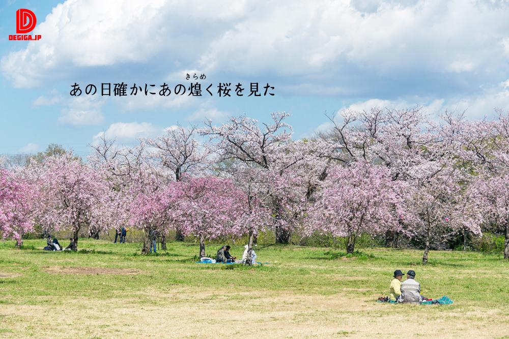 桜素材『あの日確かにあの煌く桜を見た』より
