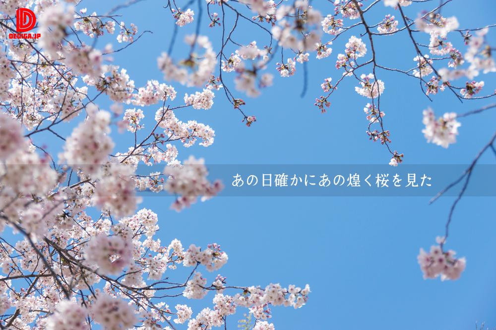 桜素材の新作『あの日確かにあの煌く桜を見た』より