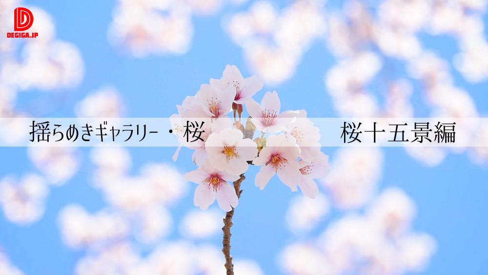 揺らめきギャラリー・桜(桜十五景編)デモリール