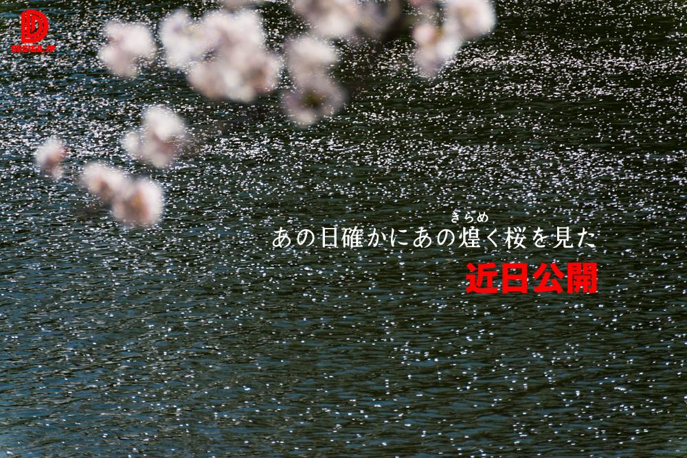 桜素材新作の予告