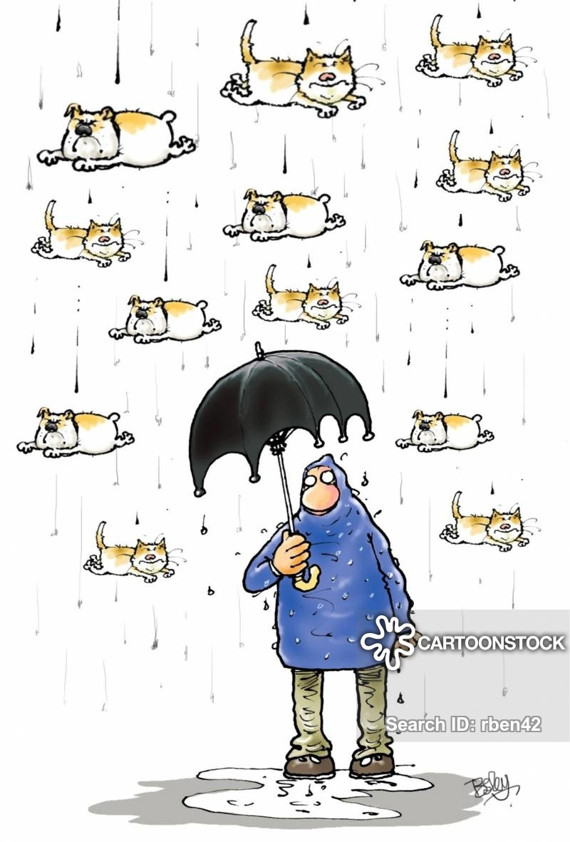 0904weather-raining_cats_and_dogs-dogs-cats-felines-pets-rben42_low