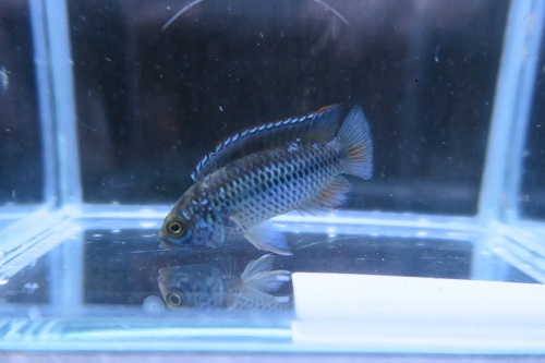 魚20191212 (1)
