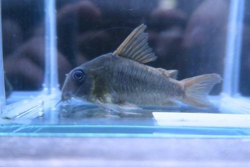 20191214魚 (6)