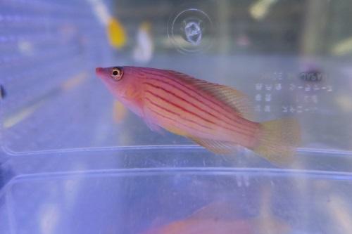 20191214魚 (1)