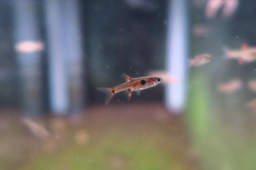2019219魚 (5)