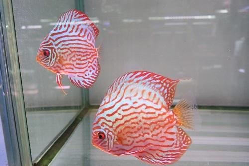 20200111魚 (3)