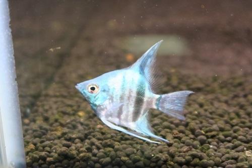 20200111魚 (1)
