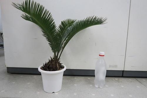 20200116草 (3)