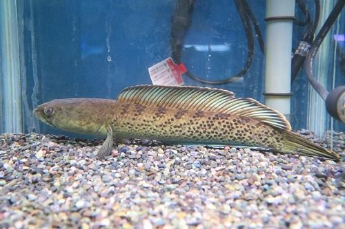 20200118魚 (3)