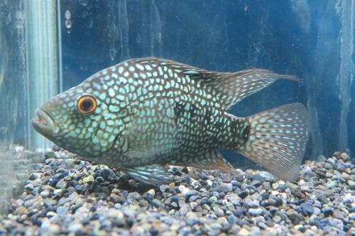 20200118魚 (1)