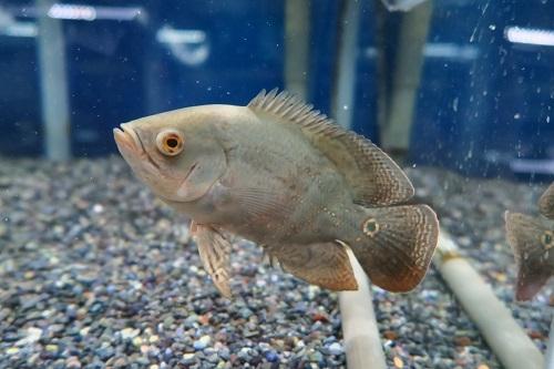 20200209魚 (5)