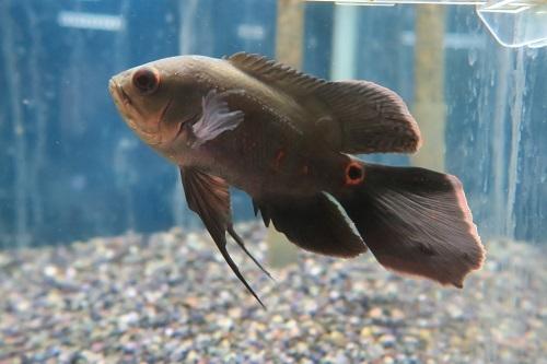 20200209魚 (3)