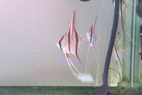 20200209魚 (1)