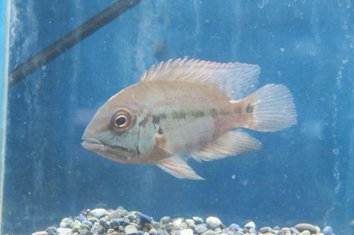 20200216熱帯魚 (1)