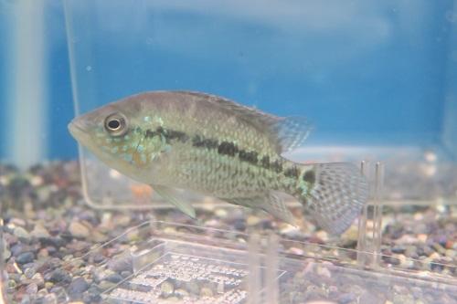 20200216熱帯魚 (2)