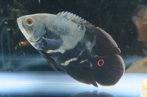 20200220魚 (5)