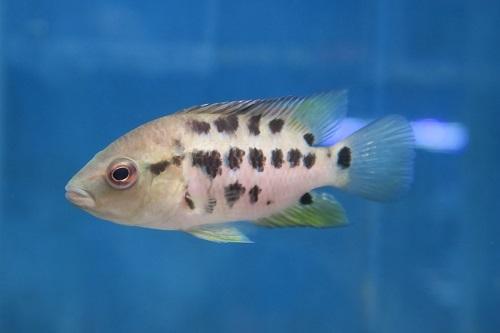 20200220魚 (4)