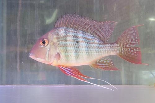 20200220魚 (1)