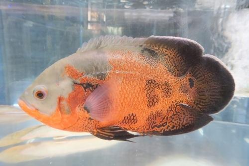 20200224魚 (3)