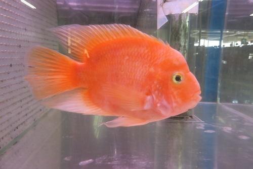 20200224魚 (2)